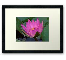 Water Lilies V Framed Print