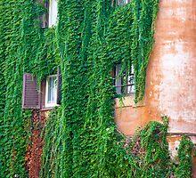 Greenfall by Luca Tranquilli