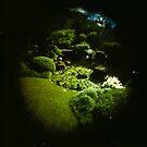 Fish Eye Botantic Gardens by mewalsh