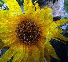 Sunflower Sutra by Paul Todd
