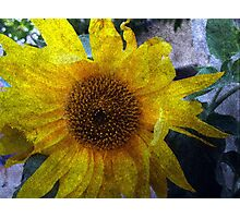 Sunflower Sutra Photographic Print