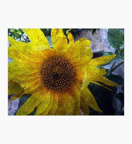 Sunflower Sutra Photographic Print