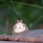 Mr. Toad by Michele Markley