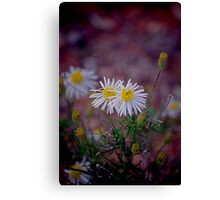 Pretty tough Canvas Print