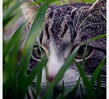 Stalker by kurrawinya