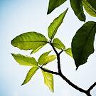 Leaf by artz-one