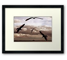 Gulls Heading for the Isle of May Bird Sanctuary Framed Print