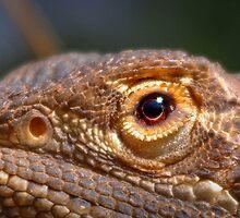 Dragon eye by kurrawinya