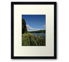 Through the cat tails Framed Print