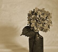 Hydrangea in a bottle by Jill Vadala