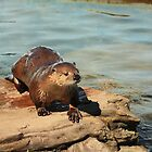 ZOO-C       I OTTER do it by Albert1000