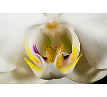 Orchidaceously Close Photographic Print