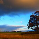 Evening Skies by Kazzii