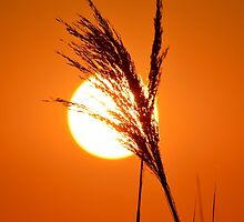Honey Colored Sunrise | Flanders, New York  by © Sophie W. Smith