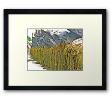 Seaweed and Rock Framed Print