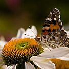 Butterfly and Flower - Brussels by Marlies van Kampen