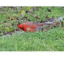 Hunting bird. Photographic Print