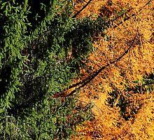 Between seasons by Amitom