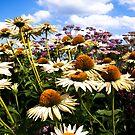Field of Flowers by Marlies van Kampen