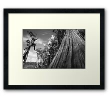 Sentinals of the Swamp Framed Print