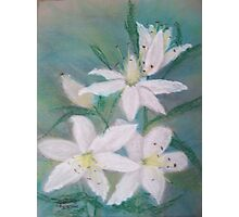 A Lesson in Lilies Photographic Print