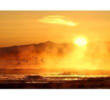 Ducks at Dawn Photographic Print