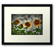 Waiting for Sun Framed Print
