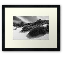 Dune Ecology  Framed Print