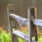 Fence Post by vigor