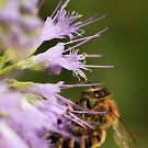 Nectar by KatsEyePhoto