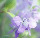 Summer purple by aMOONy