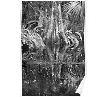 Reflections on a Cypress Swamp Poster
