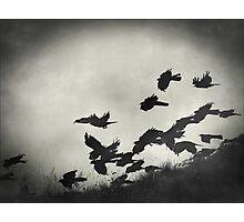 Night Flight Photographic Print