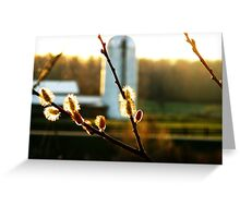 Sunset Pussy Willow Greeting Card