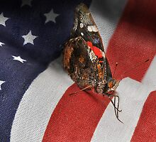 All Amearican Red Admiral by Corinne Noon
