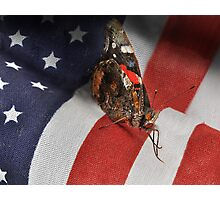 All Amearican Red Admiral Photographic Print