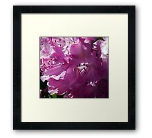 Precious and Pink Framed Print