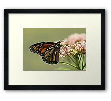 Another view... Framed Print