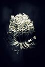 Queen Anne's Lace by Joshua Greiner