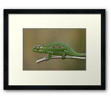 Green Dwarf Framed Print