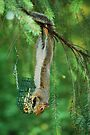 Theiving Squirrel  by Tori Snow
