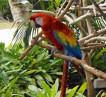 Macaw  by brandyfitz