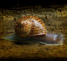 Escargot by Bryant Bush