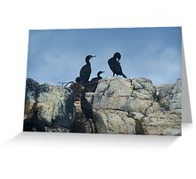 A Family of Cormorants..... Greeting Card