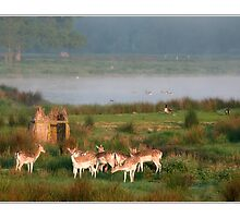 Deer early in the morning by MDSPhotoimages