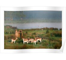 Deer early in the morning Poster