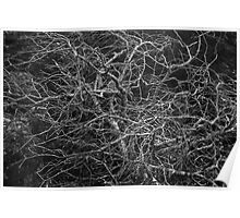 Nature's Lacework Poster