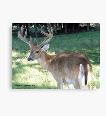 Handsome and Strong Canvas Print