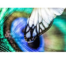 Sublime Spell Photographic Print