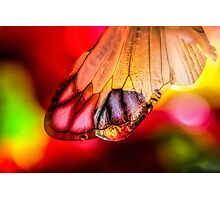 Yearning for Love and Light Photographic Print
